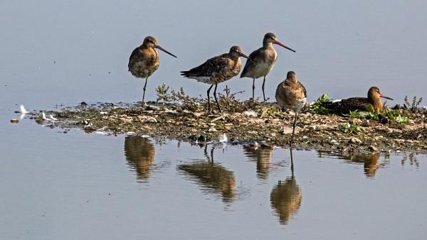 Wader Birds by Janetdinah
