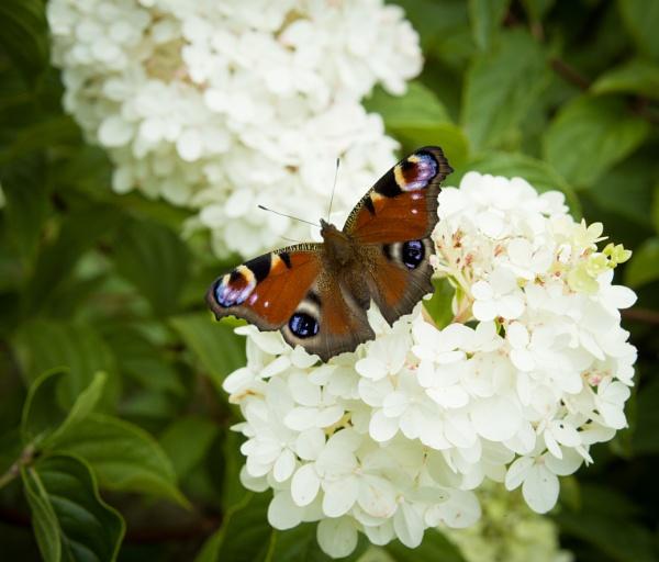 Butterfly on flower by WioletaJ