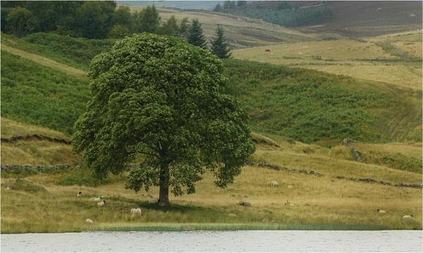 Lone Tree, Loch Shandra by MalcolmM