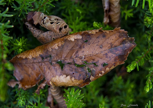 Beautiful Leaf by frenchie44