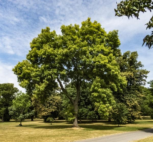 trees from Kew by derekp