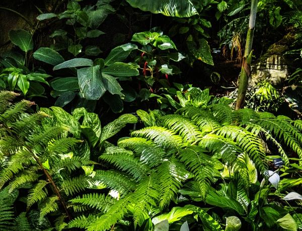 plant exotica by derekp