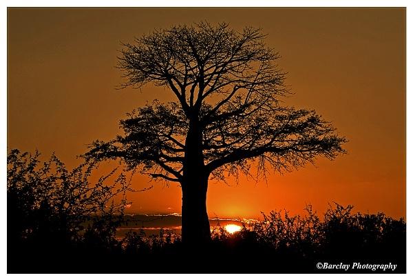 Chobe boabab sunset