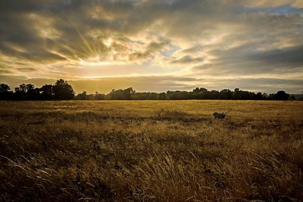 Cavenham Heath by vivdy