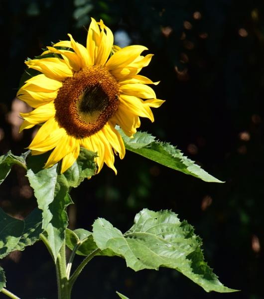 Sunny  Boy by tonyguitar