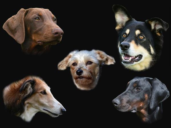 My Dogs by Holmewood