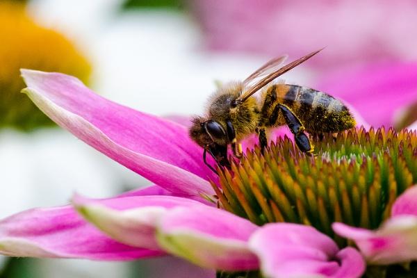 Busy bee by Photoseeker