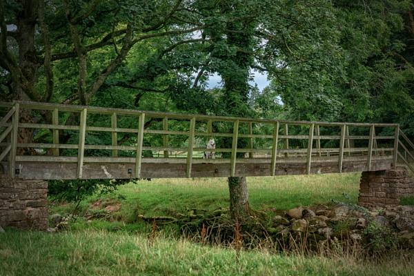 Wooden bridge by BillRookery