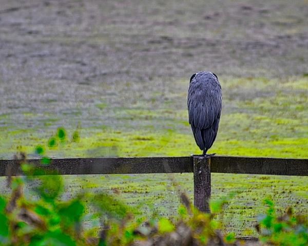 Stork by Sambomma