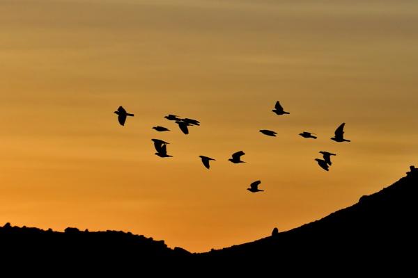 Flying at Sunrise by Savvas511
