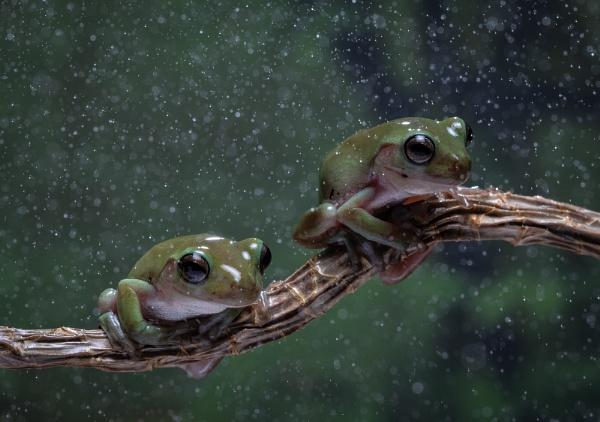 Wet frogs by Bigpoolman