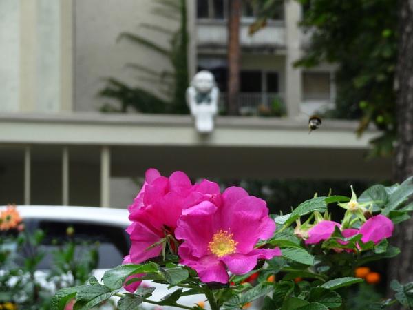 Bumblebee at work. Departure by SauliusR