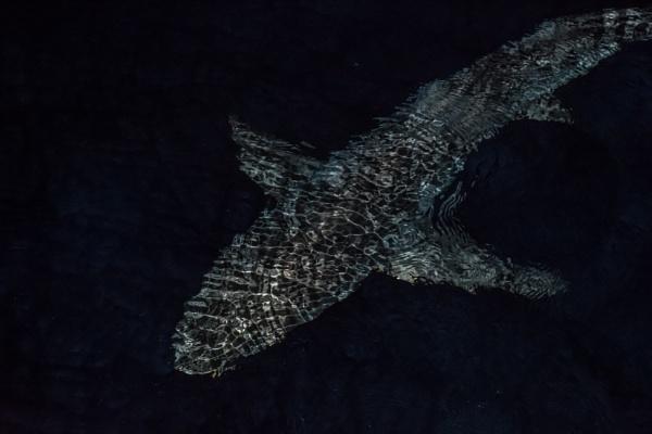 Nocturnal Marine Predator by barryyoungnz