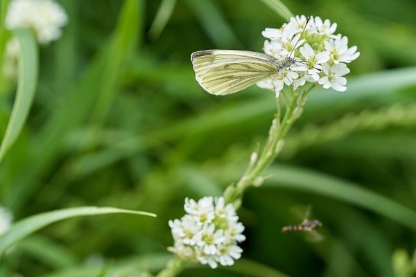 In the meadow 2 by LotaLota