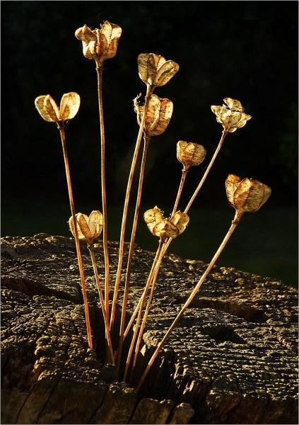 Seedheads. by MalcolmM
