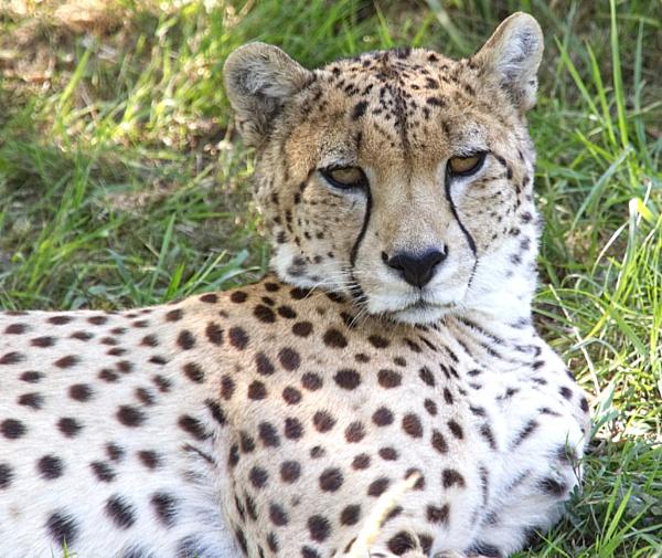 Lazy Eyes ..... by ImageProducer