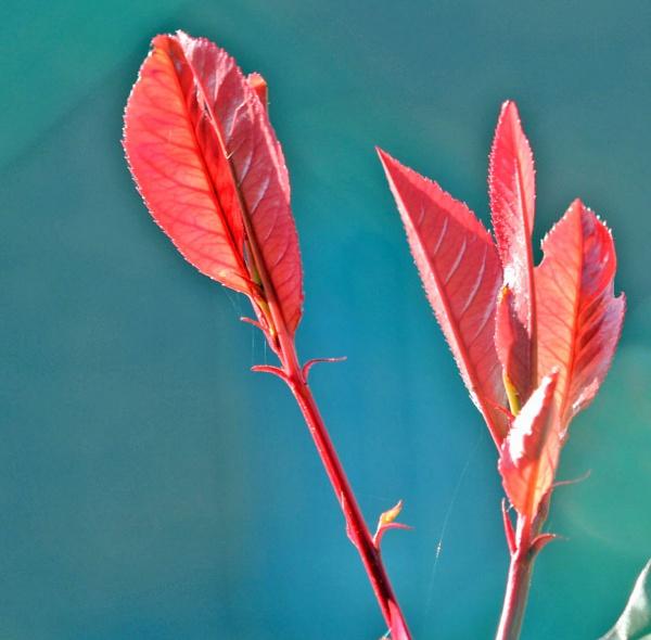 RED LEAVES`` by JOKEN