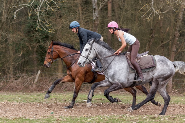 ASHURSTWOOD, WEST SUSSEX/UK - MARCH 26 : Horse Riding near Ashu by Phil_Bird