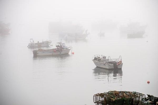 Fog by HarrietH