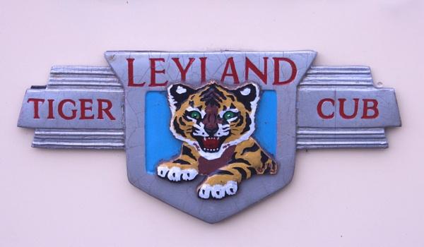 Tiger cub by ScottishHaggis