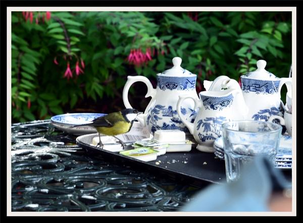 birds tea party