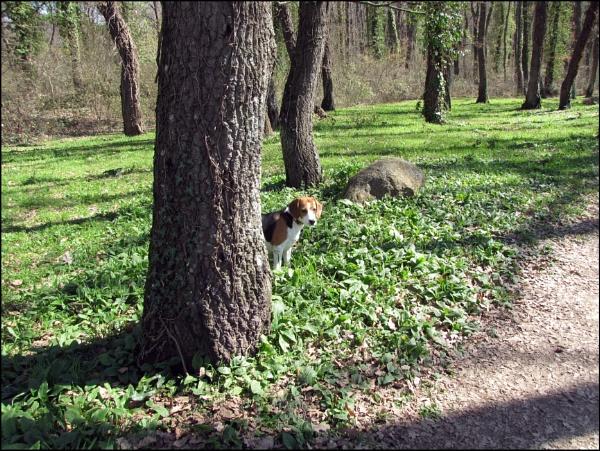 hide and seek! by laura1