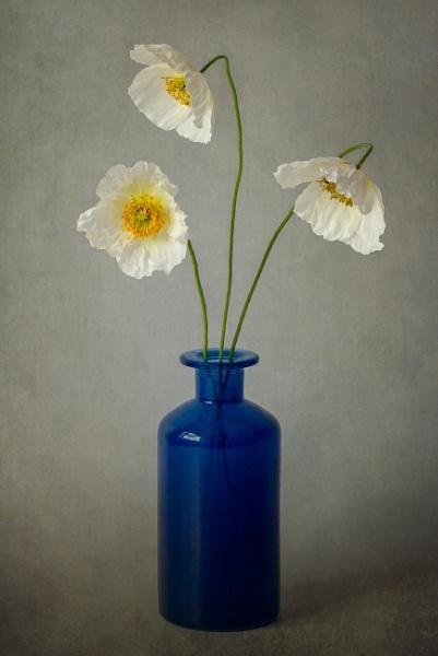 Icelandic Poppies by flowerpower59