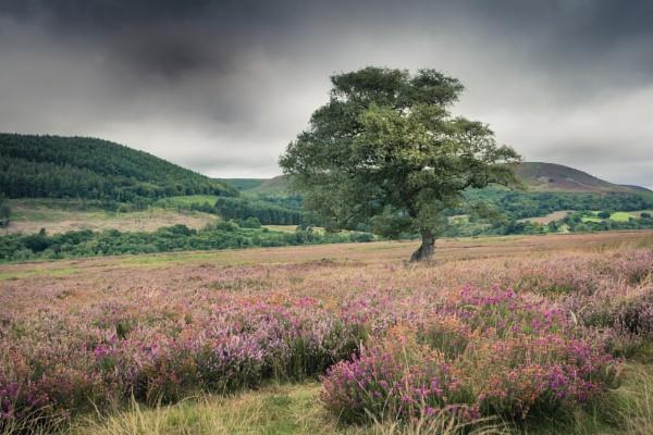 North York Moors by gerainte1