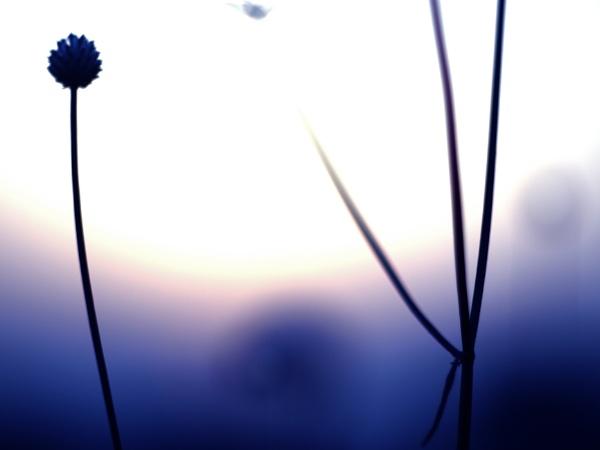 A Purple Dream by MUSTDOS