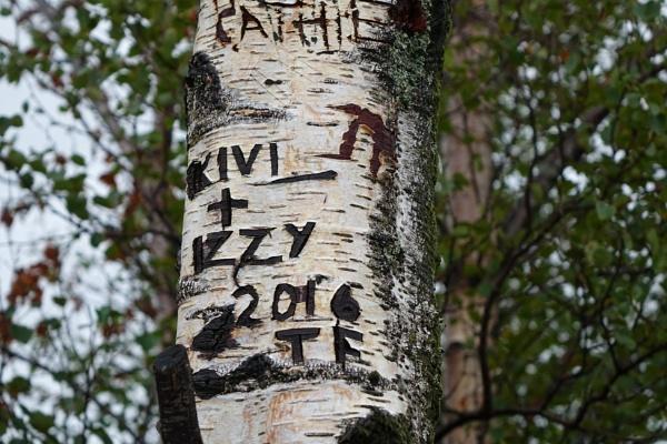 Graffiti tree by frogs123