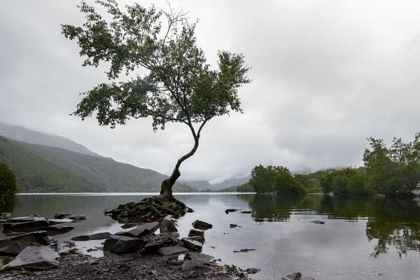Lone tree by kip55