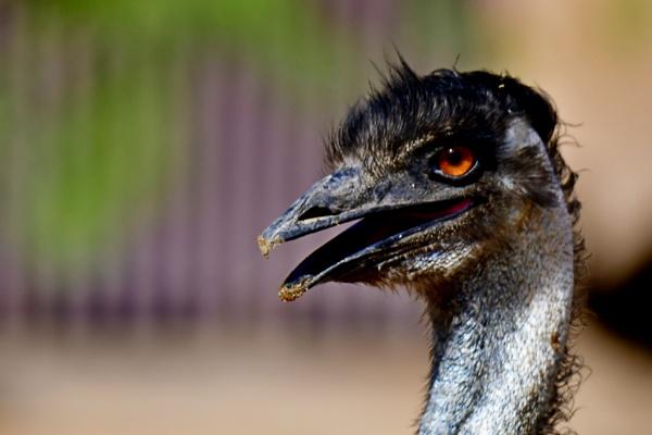 Emu by Savvas511