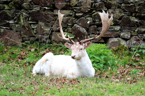 Oh deer! by bensarmyknife