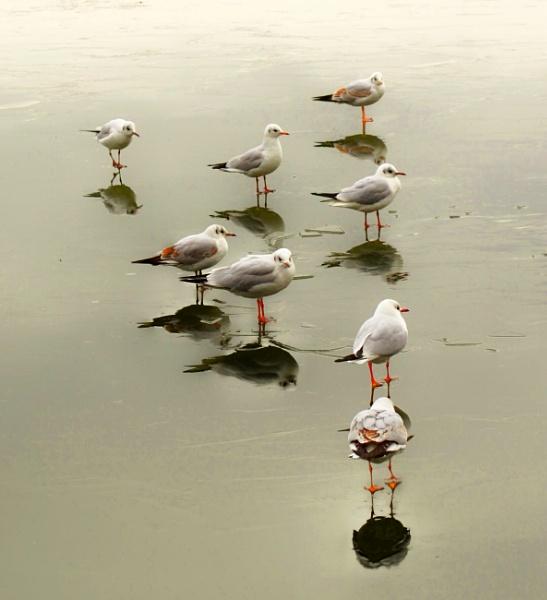 Sea birds on ice by ktboldy