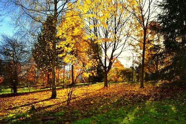 Elvaston woods derbyshire by ktboldy