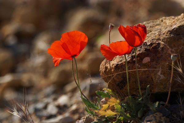 Wild Flowers Of Crete by Silverzone