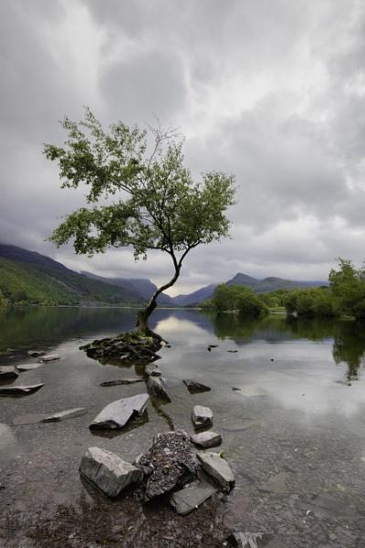 Lone Tree by CraigWalker
