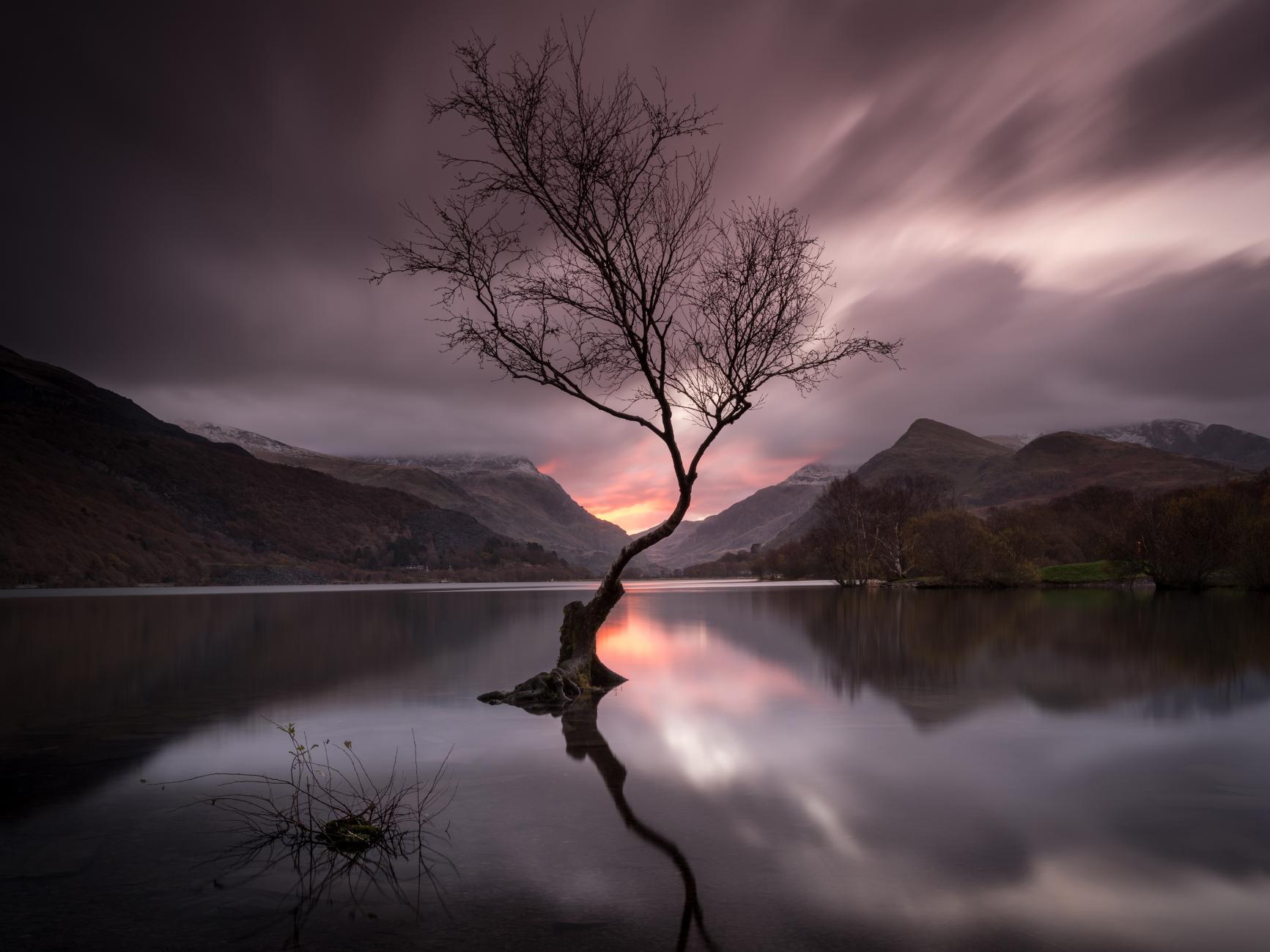 Lone Tree of Snowdonia
