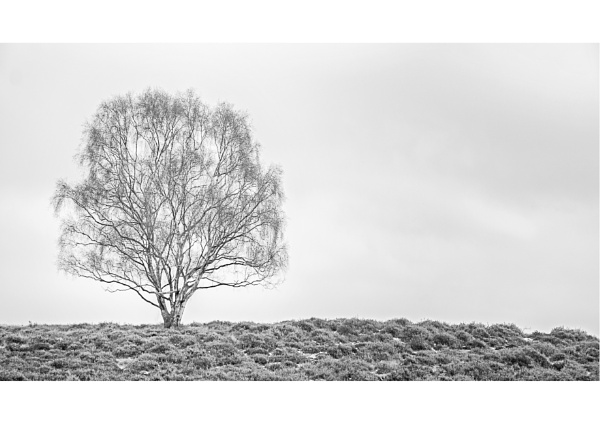 Suffolk Trees by vivdy