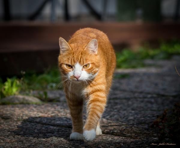 Neighbors cat. by kuvailija
