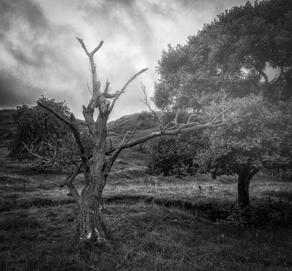 Bare limbed trees by BillRookery
