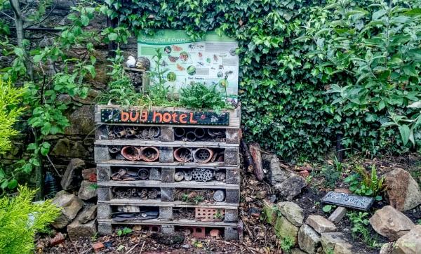 The Bug Hotel.