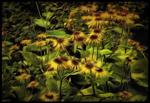 city weeds #2 by leo_nid