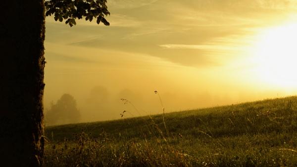 morning light by matkaspa