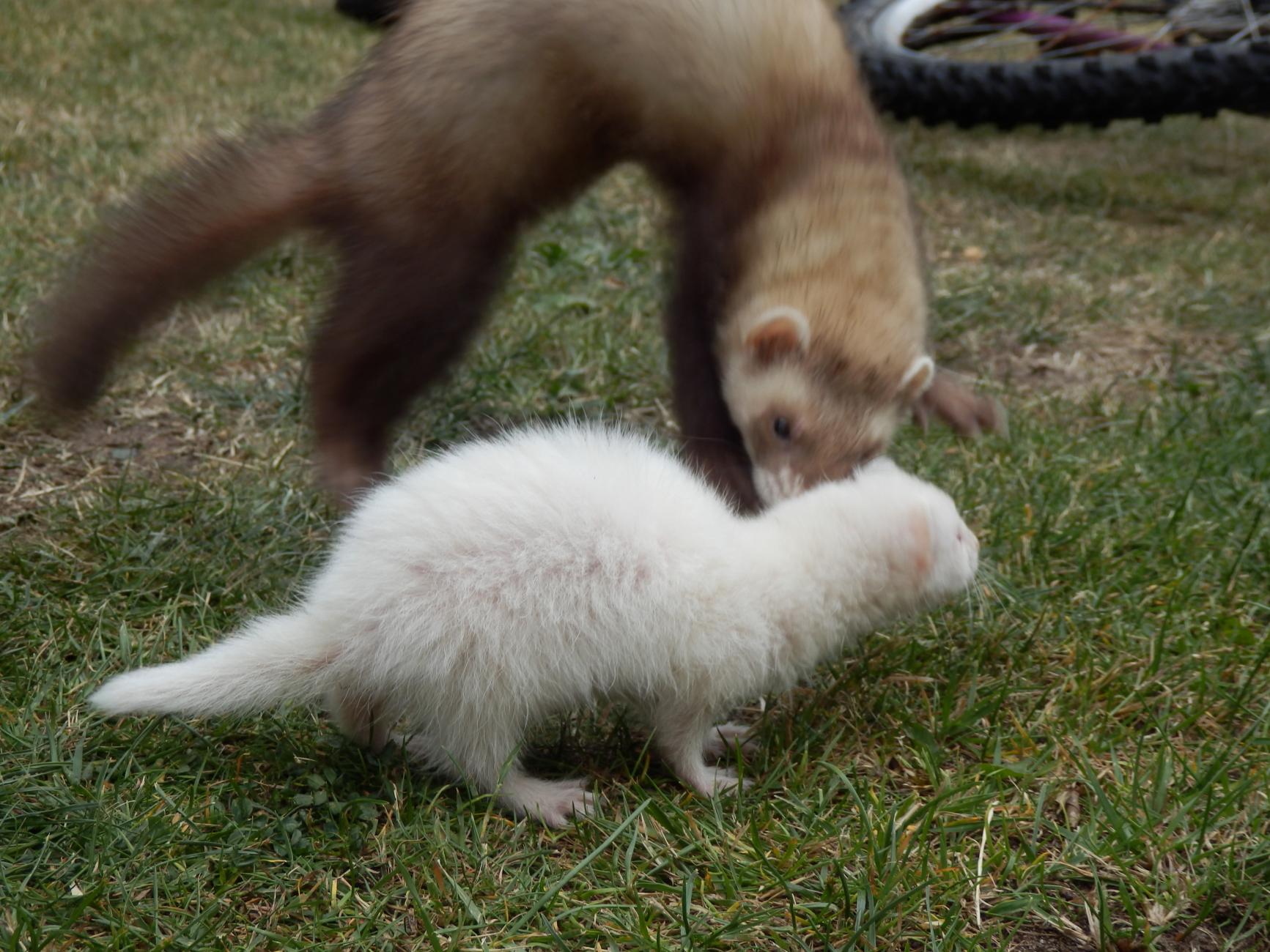 Molly and Cara playing,