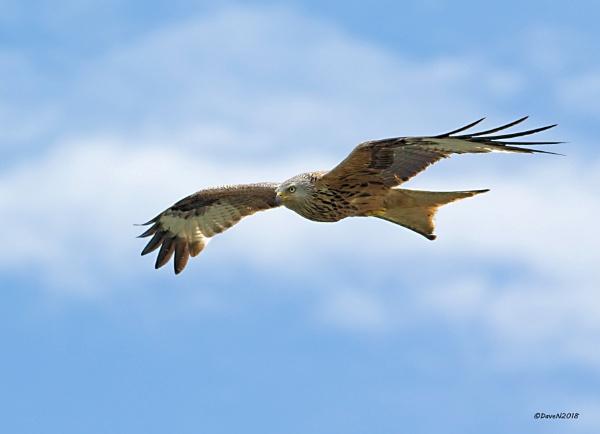 Gliding by by DaveNewbury