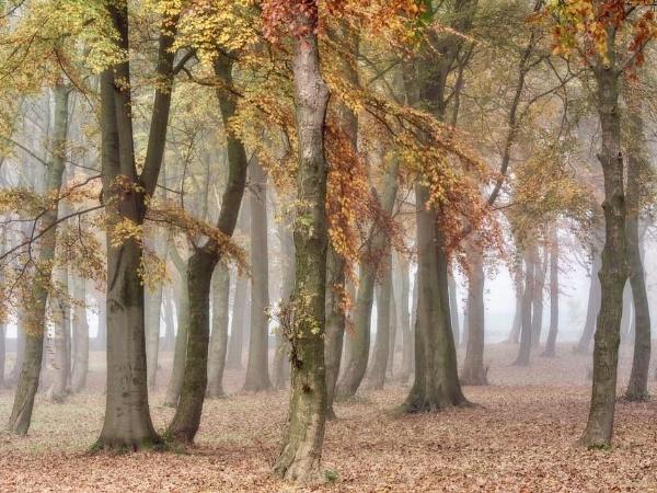 Autumn Mist by Coloured_Images