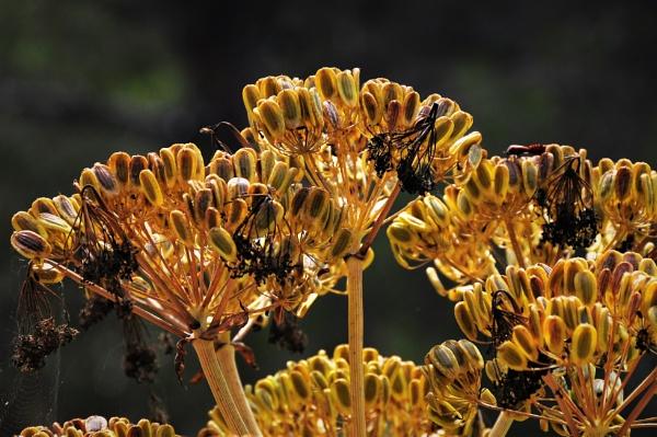 Seed Heads by KingArthur