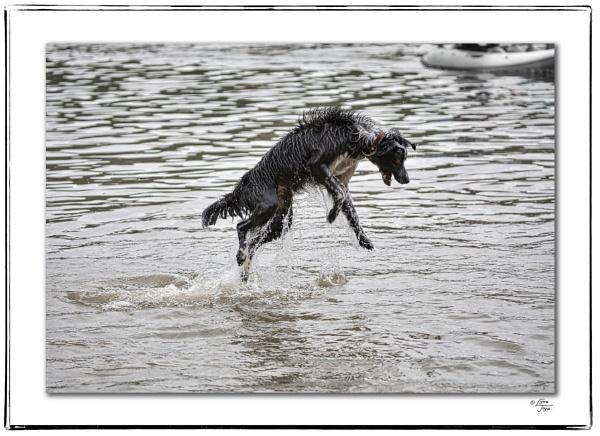 Coniston Canine Aquabatics by LynneJoyce