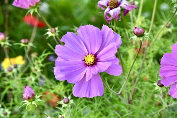 Pretty flower by Mannyfreedman